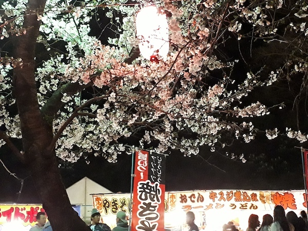 和歌山城の夜桜