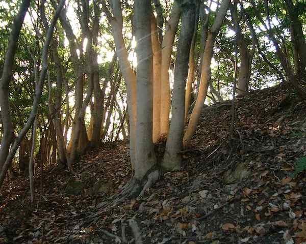 「光る木」観察会