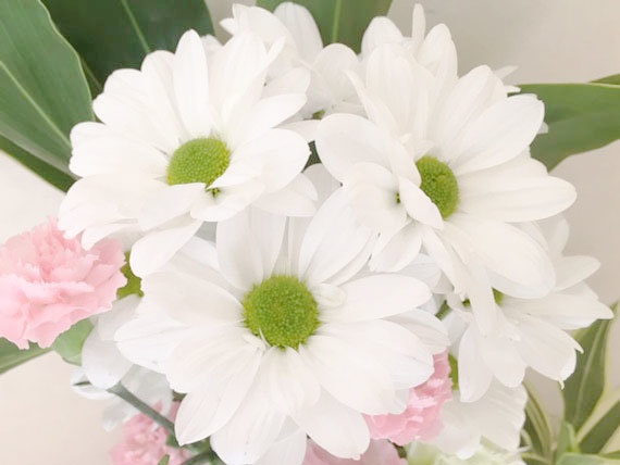 白い花_1