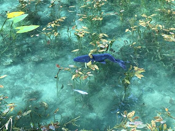 モネの池_1