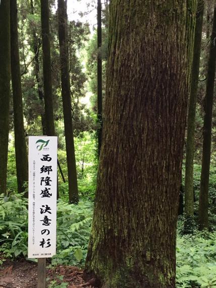 龍門司坂_決意の杉