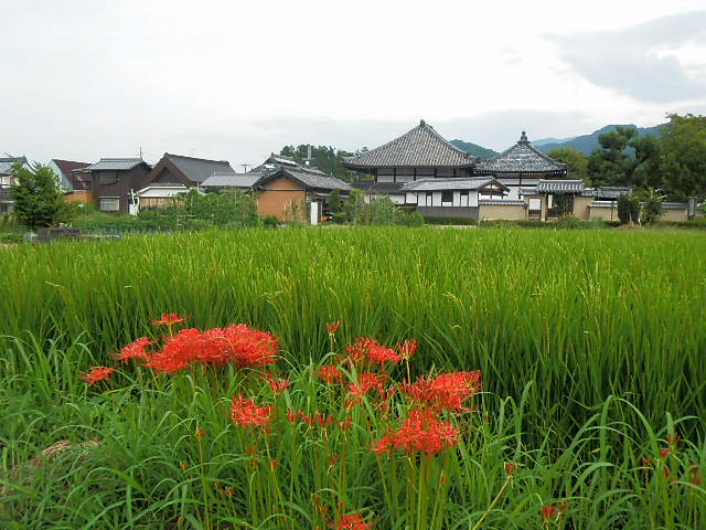 飛鳥寺と彼岸花