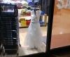 子ども用のドレス???