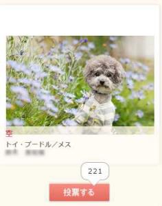 モデル犬コンテスト