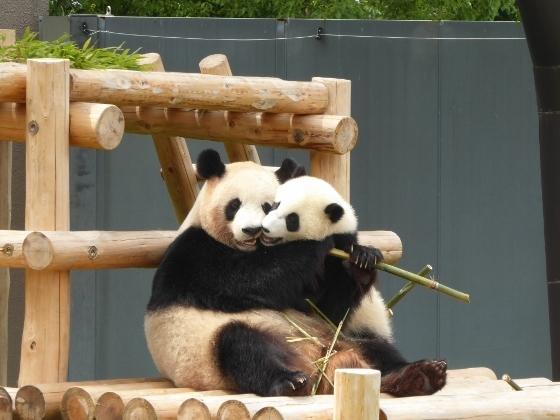 なかよしパンダ