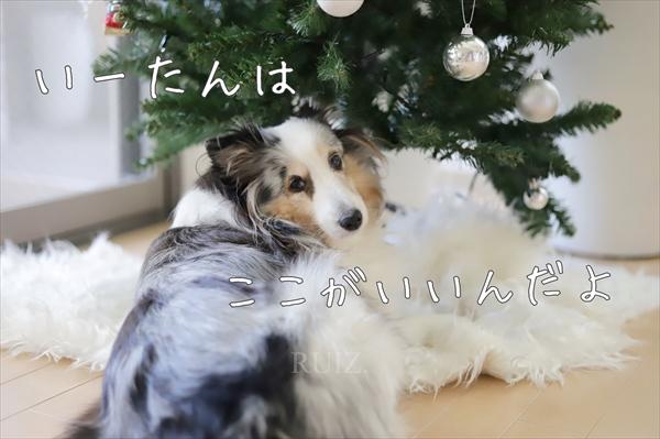 クリスマスツリー犬