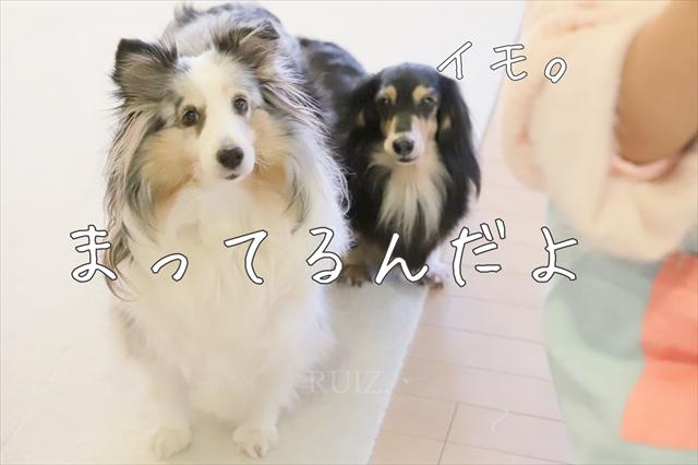 へっぽこ風❤くりすますけーき 完成編