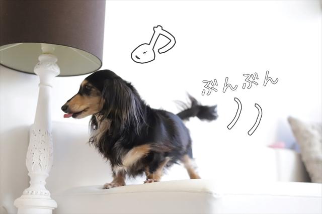 元保護犬のトイレトレーニング