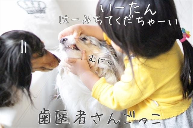 犬娘と人間娘