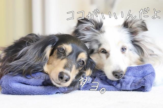無視する犬たち