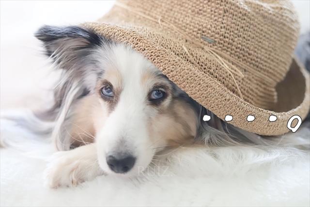 犬の第六感 いーたんとジーン編