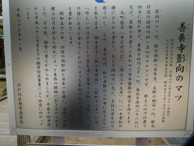 138-4-9.jpg