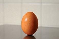 コロンブスの立卵鑽