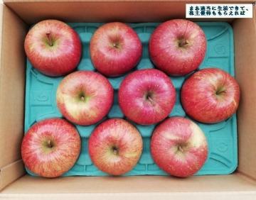 サンデー 葉とらずりんご 3kg 01 201808