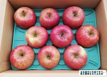サンデー 葉とらずりんご 3kg 02 201808