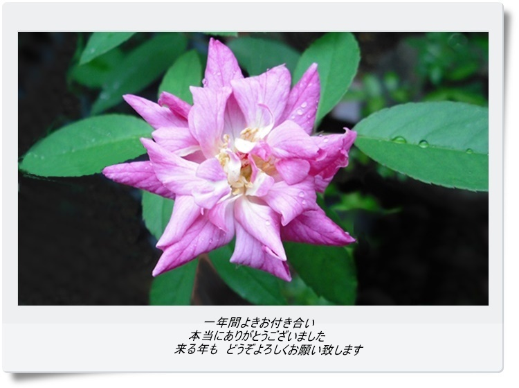 kDSCF5711-j