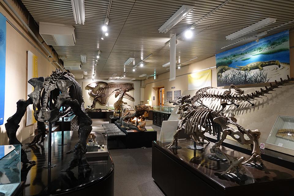 北大 博物館