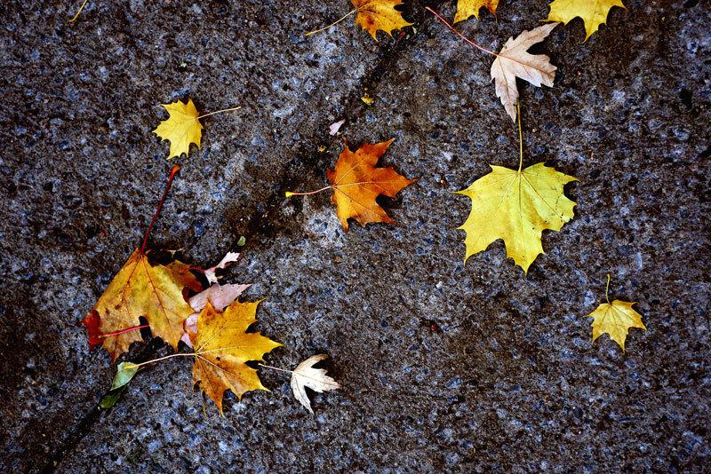 秋のメープル散歩。PART 2。