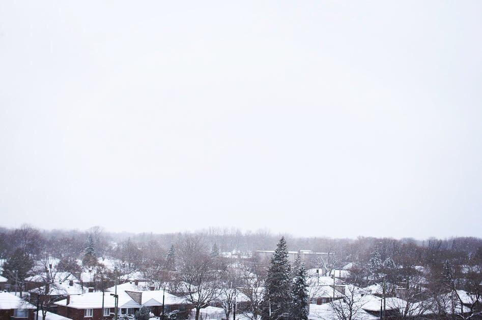 今年の初積雪。