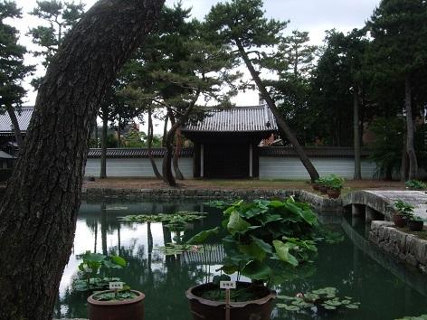 syokokuji18.jpg