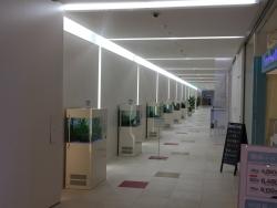 六本木 東京ミッドタウン ミニ水族館のような廊下1