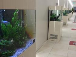 六本木 東京ミッドタウン ミニ水族館のような廊下2