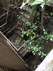 六本木ヒルズ 廃墟化した民家 不自然な窪地