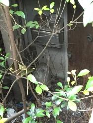六本木ヒルズ 不自然な窪地 廃墟化した民家 郵便受けと木製のドア