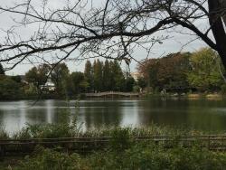 大田区 洗足池の風景 赤坂