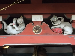 赤坂 美喜井稲荷神社 猫2