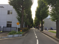 大岡山・洗足池 東工大キャンパス 銀杏並木