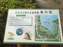 洗足池散策 水生植物園2