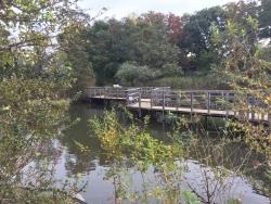 洗足池散策 水生植物園1