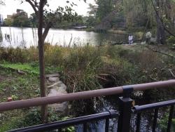 洗足池散策 洗足池に注いでいる小川