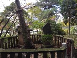 洗足池散策 袈裟掛けの松1