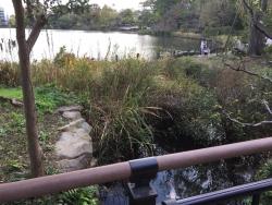 暗渠散歩 洗足流れ 清水窪流れ12 洗足池に注ぐ