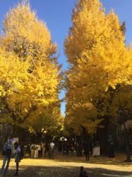 東大 正門前銀杏並木