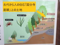 成城学園 古代から人の住む国分寺崖線上の土地