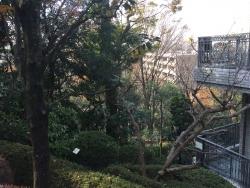 成城学園 国分寺崖線上からの眺め2