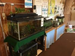 成城学園 ビジターセンター 川魚水槽