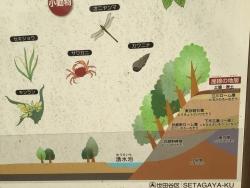 成城学園 神明の森特別保護区 説明板