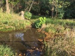 成城学園 神明の森特別保護区2