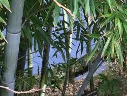 麻布 がま池水面2