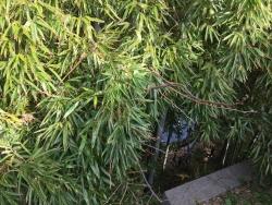 麻布 がま池水面1
