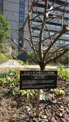 三井住友海上駿河台ビル 屋上庭園 ニュートンの木 漢陽楼記事