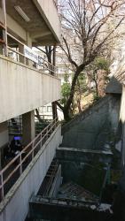 明治大学10号館脇の崖 神田散策