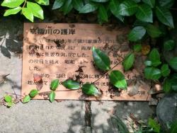 京橋川護岸2 銀座記事