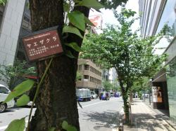 銀座桜通り2 銀座記事