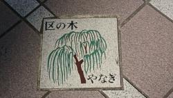 中央区の木 柳 銀座記事(2)