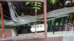 藤の大滝3 日暮里の東記事